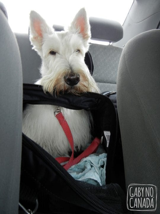 Cara de tédio - no carro