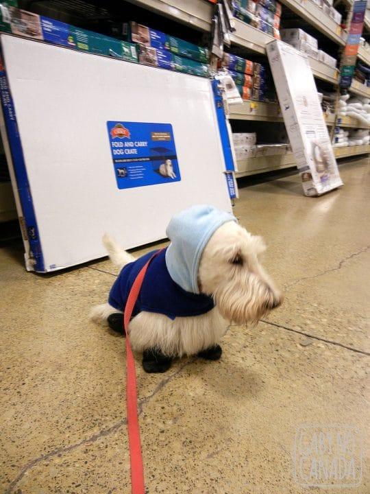 Touca para proteger as orelhas do frio!