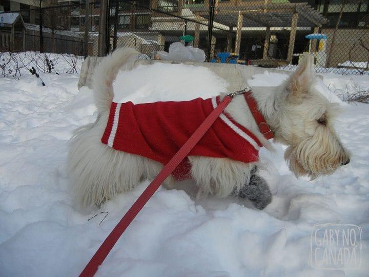 Joe se aventurando na neve!