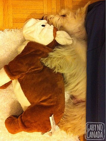 Dormindo de Conchinha